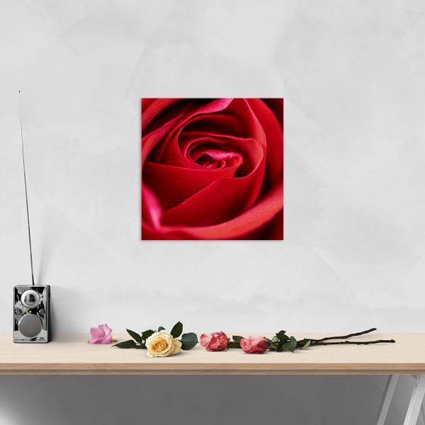 Самостійний сегмент модульної картини Роза