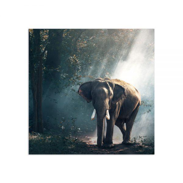 Самостоятельный сегмент модульной картины Слон