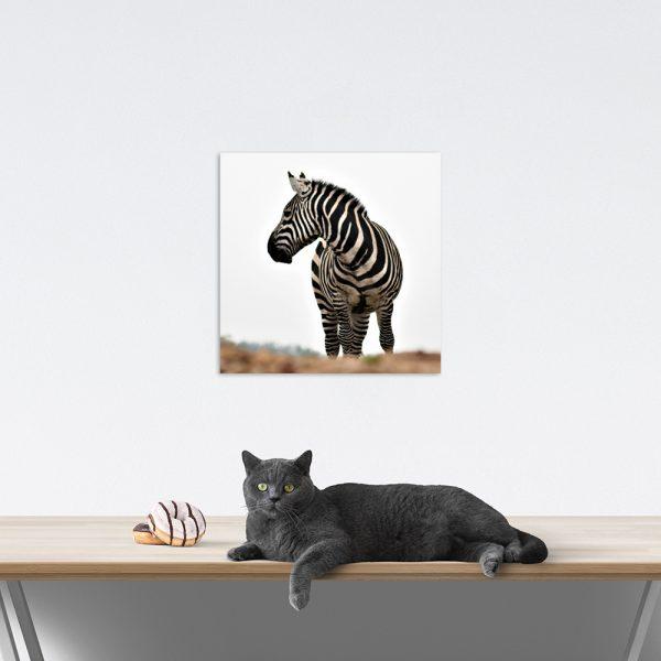 Самостоятельный сегмент модульной картины Зебра
