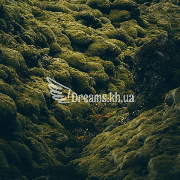 Інтер'єрний постер Лісовий килим