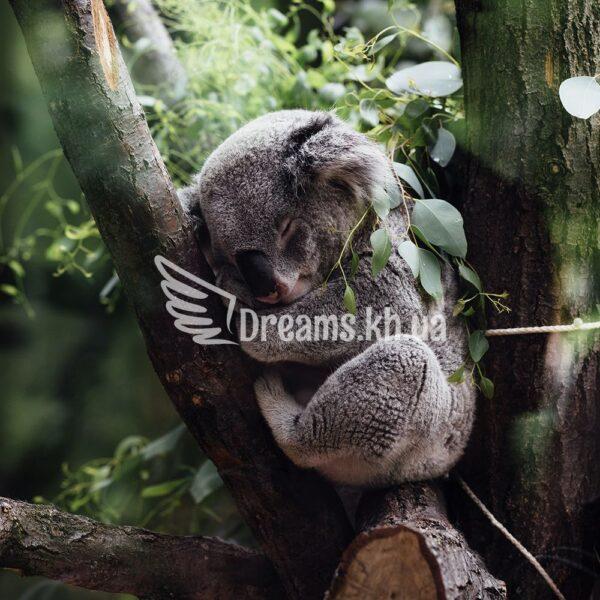 Інтер'єрний постер Спляча коала