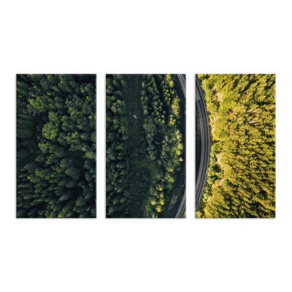 Модульная фотокартина на холсте Дорога в лесу